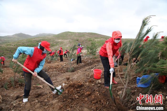 点滴力量汇成绿色海洋沈阳民众6年公益种树15万余棵